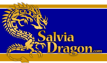 Salvia Dragon